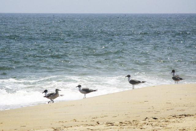 Sandbridge Beach Vacation Rentals By Owner