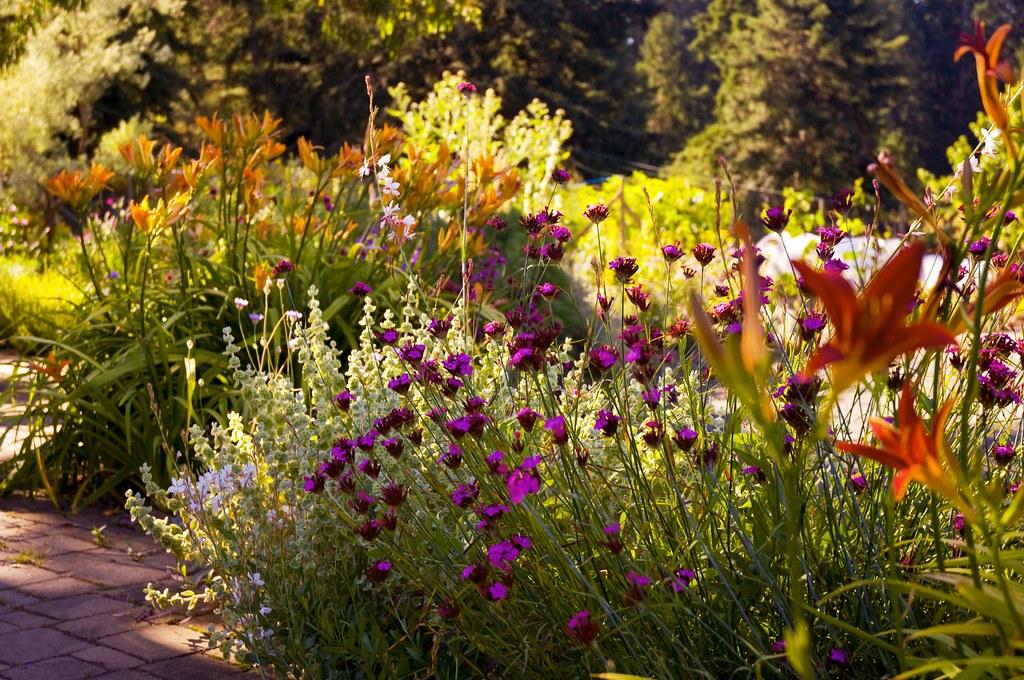 A Mediterranean Garden | By Jayscratch A Mediterranean Garden | By  Jayscratch