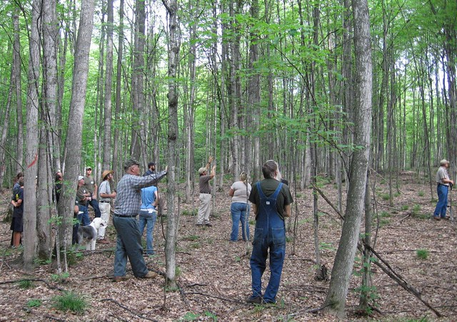 Backyard Forest Management : Forest Management  During the tour, the landowner Ed Wenta
