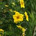 Wildflowers C20100627 135