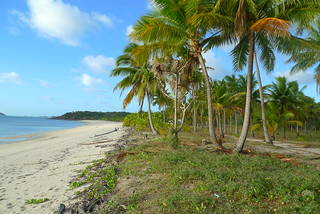 Badu Island Lilly Beach | by Killer White Fluff