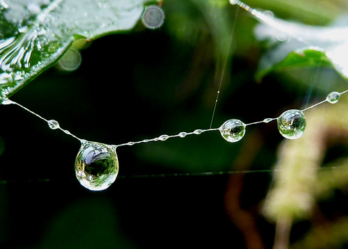 Raindrops keep falling... | by Mirthe Duindam