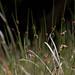 A Bokeh of Grass