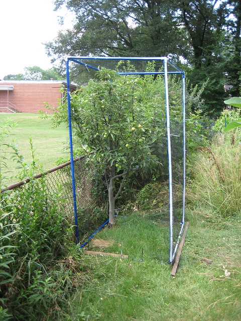 Apple Tree With Pvc Frame And Netting To Keep Out The