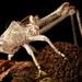 Katydid Exoskeleton