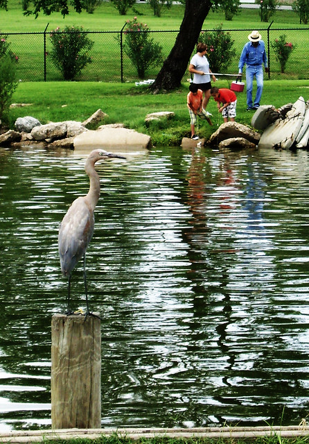 fishing  river terrace park  channelview  texas 0724101210