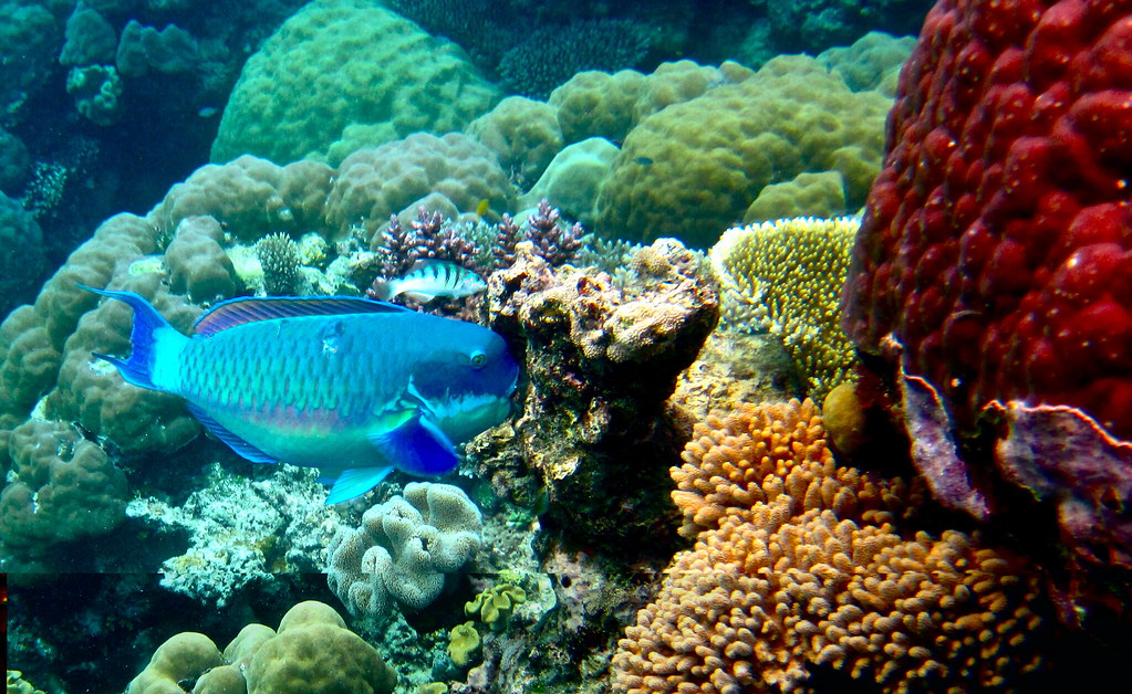 Best Barrier Reef Tour Cairns