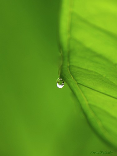 A Tear Drop in Green.... | by aroon_kalandy