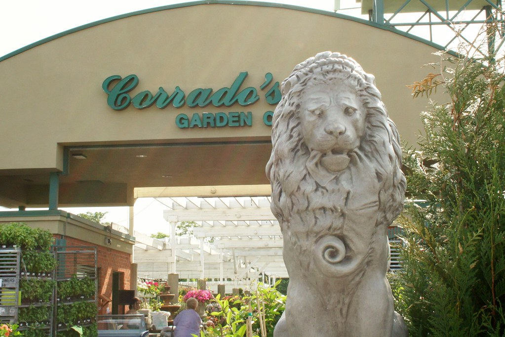 Lion spotted in clifton nj at corrado 39 s spotted at - Corrado s garden center clifton nj ...