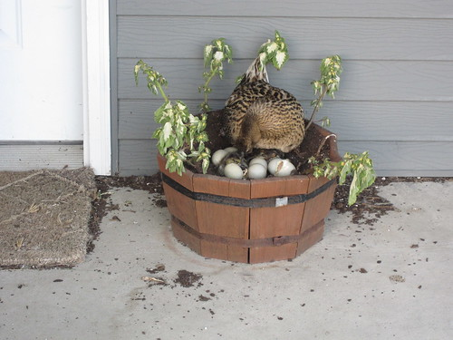 Porch Duck Nest | by pbyrne