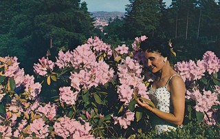 Rhododendrons in Bloom - Portland, Oregon | by The Cardboard America Archives