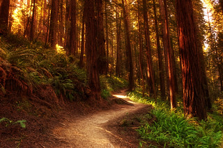 The James Irvine Trail | by kern.justin