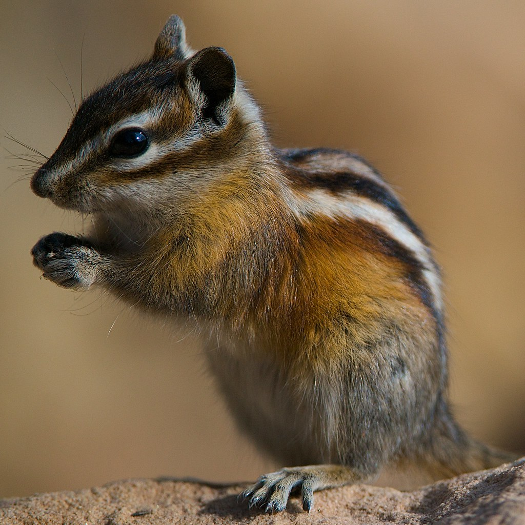 Colorado Images: This Little Critter Was Grabbing A