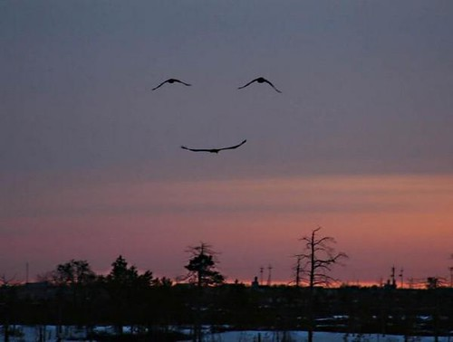 smile | by thefleafm