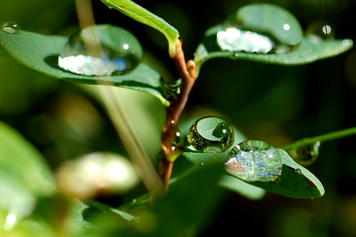 Leaf reflected in a drop | by Nothingbeatsnature