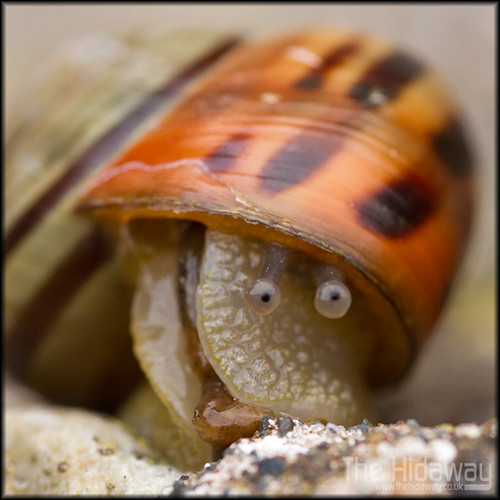 Silly snail | by Simon Bone Photography