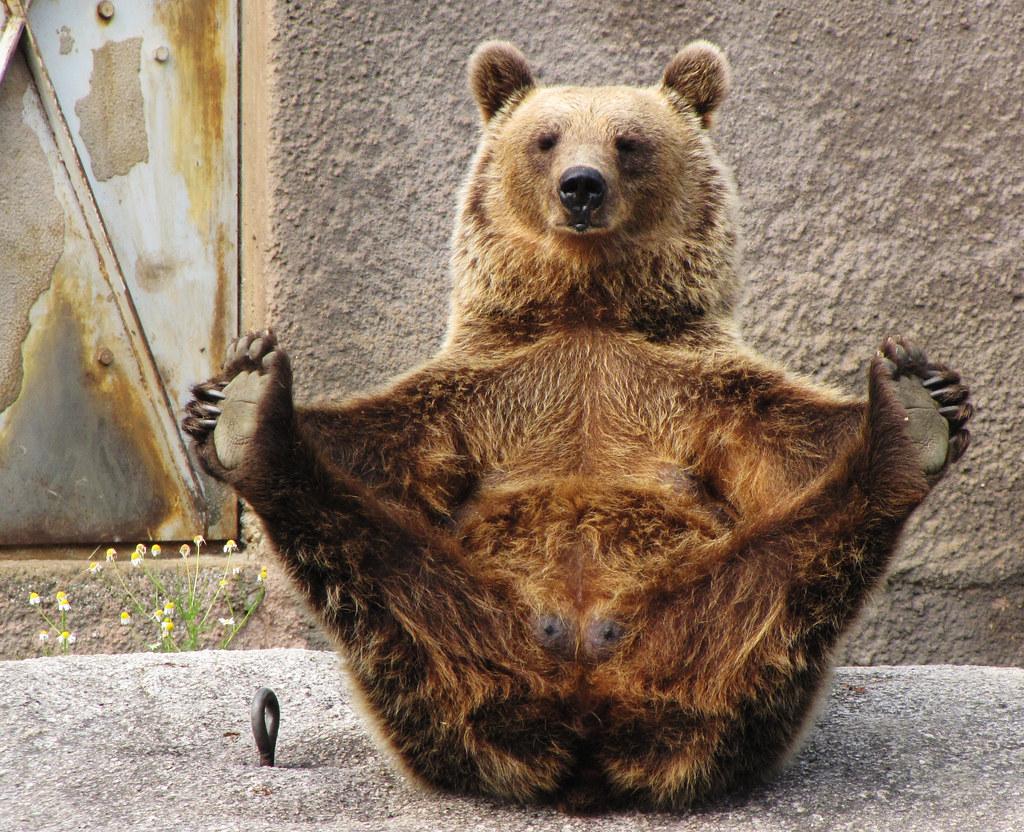 yoga bear | Ähtäri ZOO | meta penca | Flickr