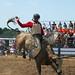 Bull Rider 2