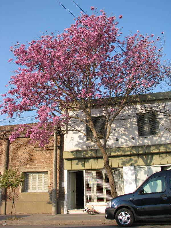 El arbol de casa avisa la primavera un mes antes javier - Casas en el arbol ...