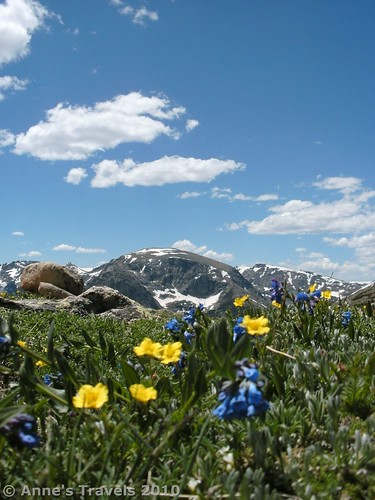 Wildflowers along the Ute Trail East in Rocky Mountain National Park, Colorado