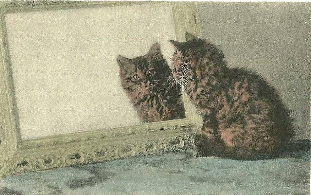 Le chaton et le miroir m ga flickr for Miroir 3 pans