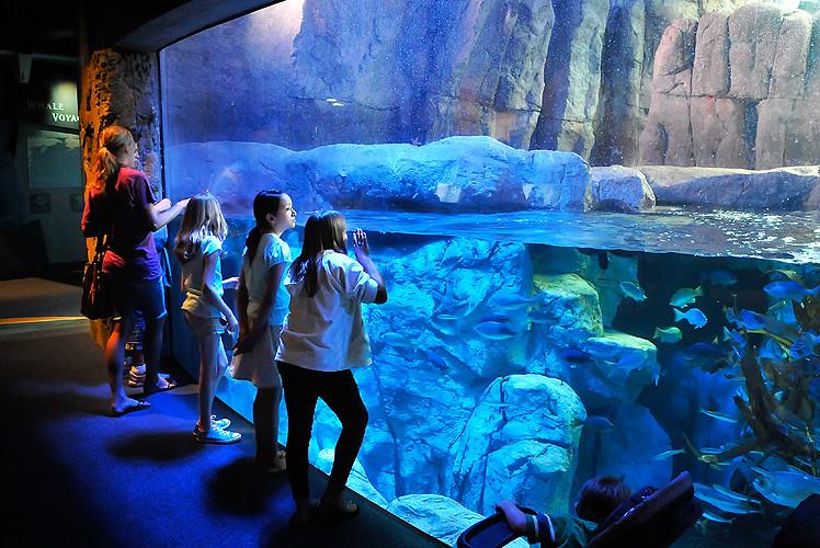 Otter Exhibit At Long Beach Aquarium Of The Pacific Flickr