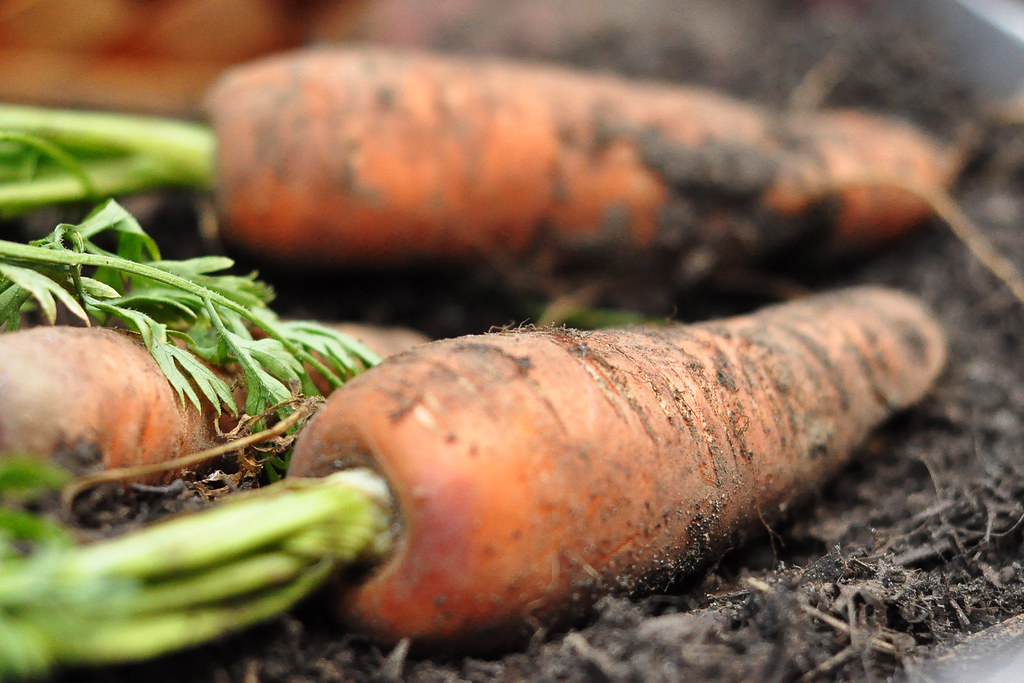 Seattle urban farm co mobile vegetable garden carrots flickr - Urban gardening in contaminated areas ...