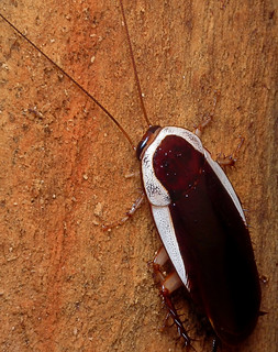 Roach | by James Niland