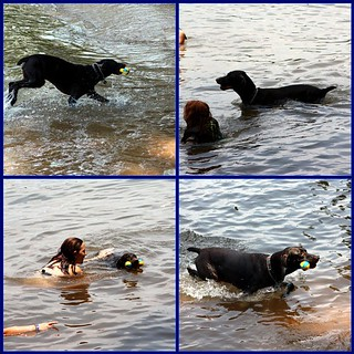 BENNI'S FUN AT THE LAKE | by Doggies Are From Heaven