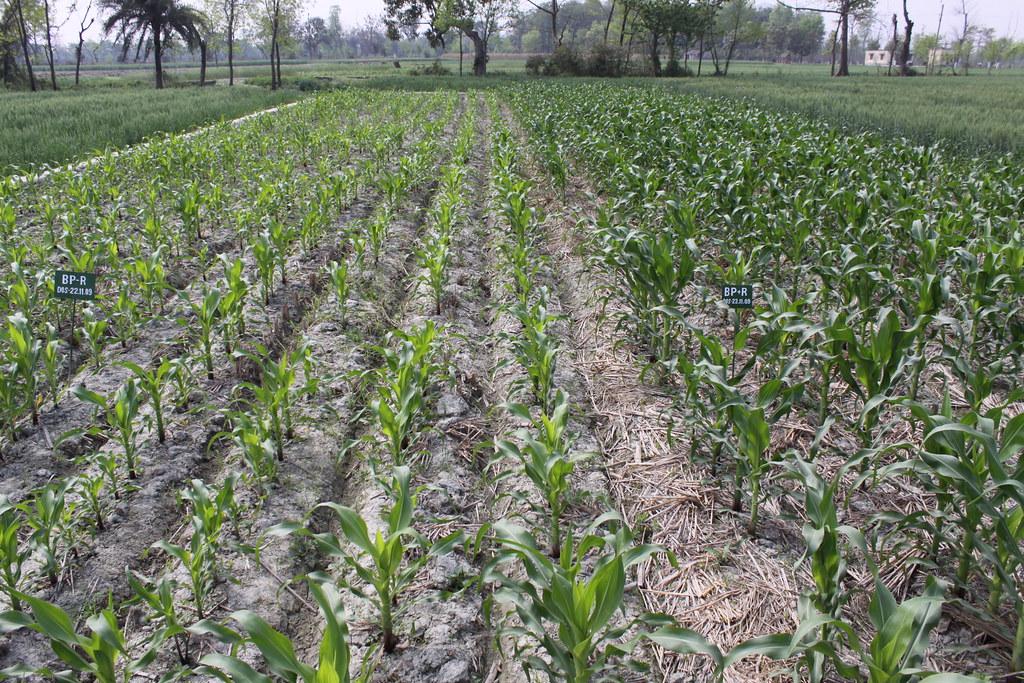 Economic Survey 2016-17 Volume 2: Agriculture and Food management Reforms Measures