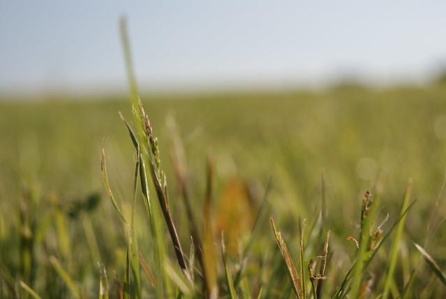 grass macro photography - photo #16
