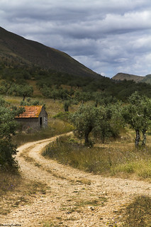 olive trees portugal _MG_5941 | by Eva Blue