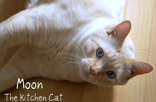 Moon The Kitchen Cat | by CinnamonKitchn