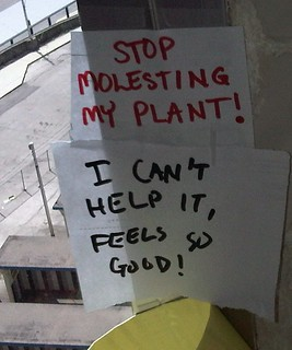 Excuse me, I'm here to file a restraining order on behalf of my plant | by passiveaggressivenotes