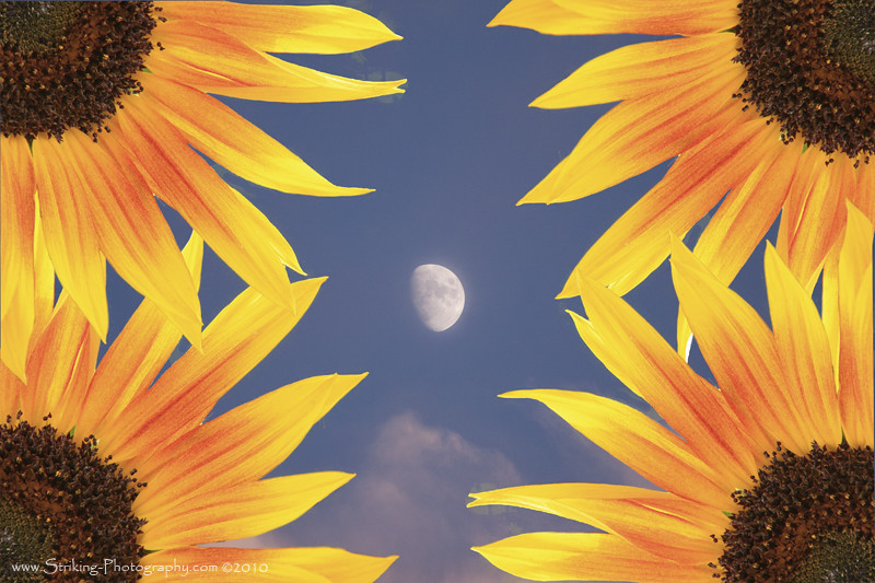 Sunflower Moon   3/4 Sunflower corners with a 3/4 moon in ...