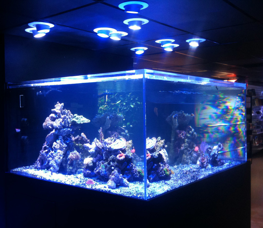 led aquarium lights photon pendants over a reef aquarium. Black Bedroom Furniture Sets. Home Design Ideas