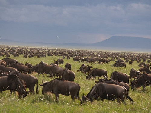 Great Migration | by FollowOurFootsteps