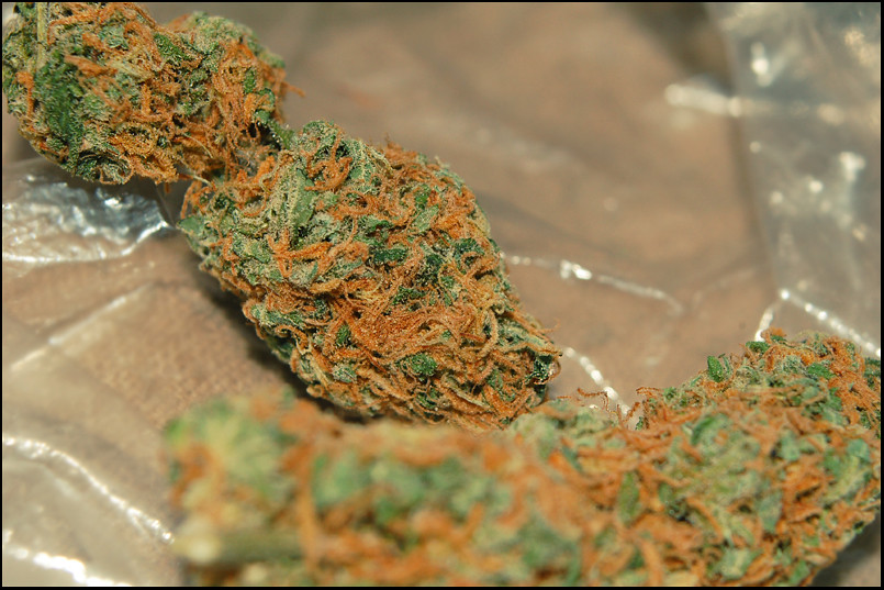 orange kush | darkthra | Flickr