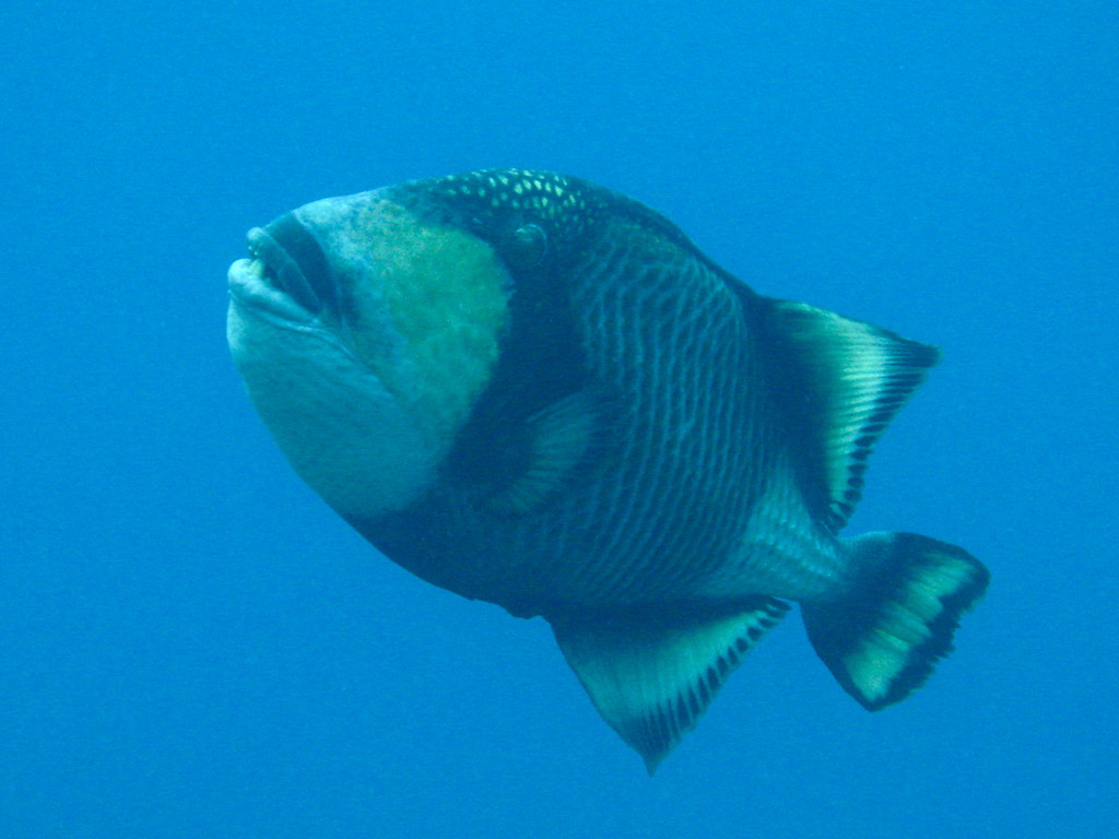 Coolest fish in the world for Pictures of the coolest things in the world