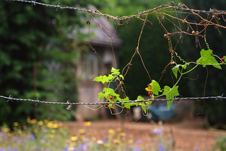 Fence detail, allotment garden, Chinon | by *Susie*
