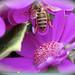 lovely bee...