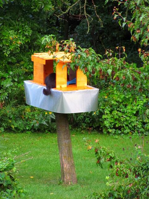 Raccoon Proof Feral Feeding Station Woohoo I Made This