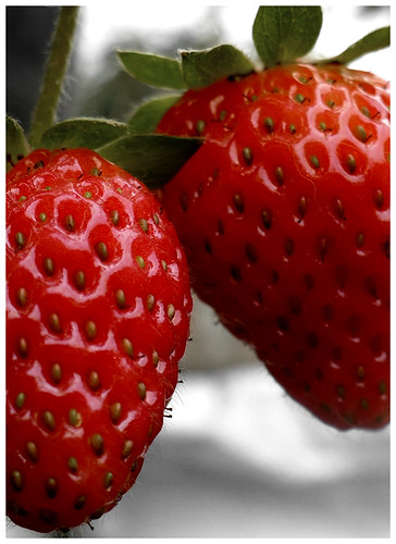 Strawberries | by Manuel Olivera Photography