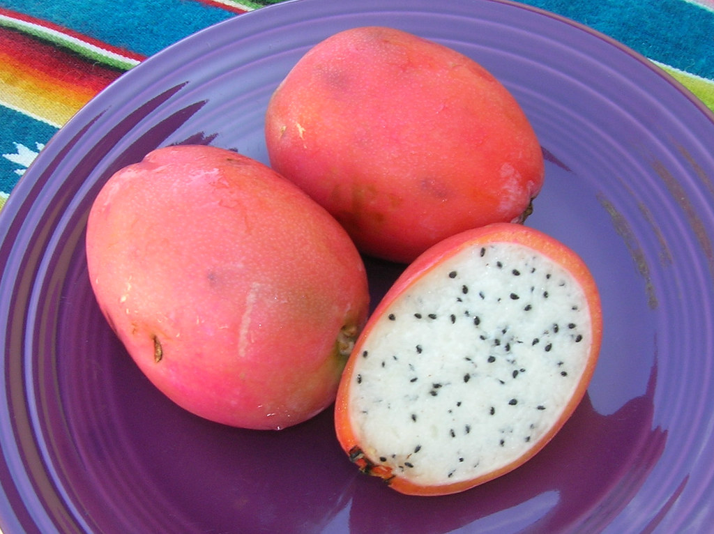 Cactus Tuna | Or cactus pears, cactus fruit, whatever you ... - photo#16