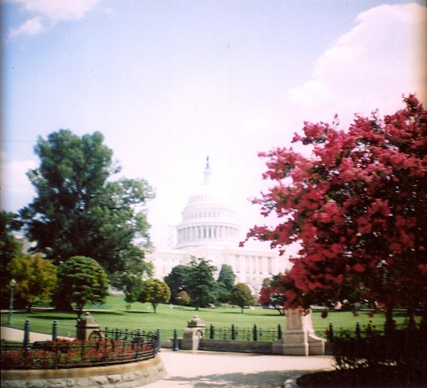 Washington Dc Shooting: Washington DC. Expired 35mm Shot On Diana Mini