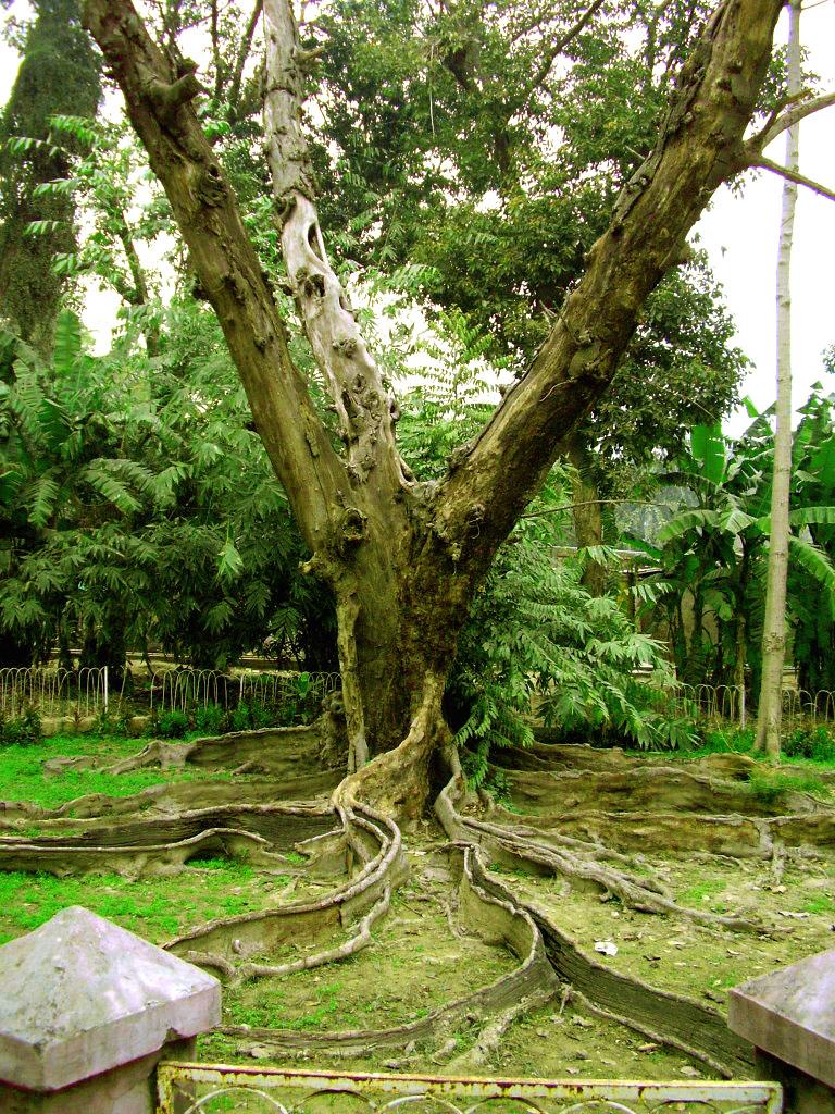 Get Free Credit Report >> Tree In Jinnah Garden - Lahore, Pakistan   In Jinnah Garden …   Flickr