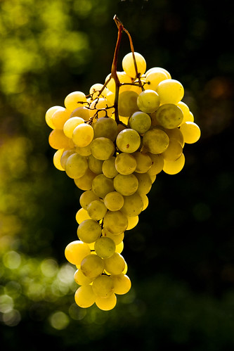 grape | by paololivorno