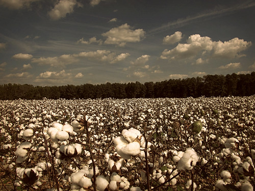 King Cotton | by History Rambler