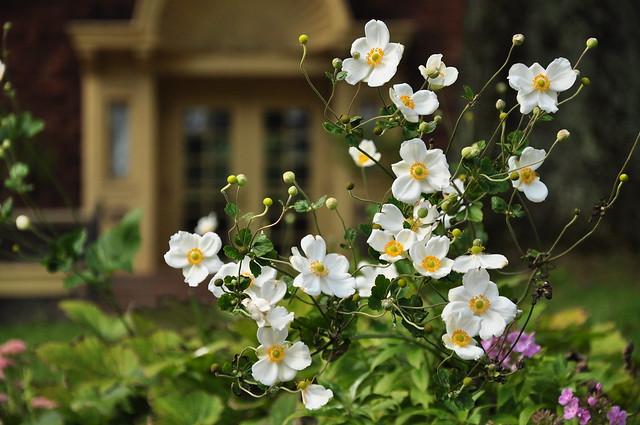 Single-blossom Rose 1