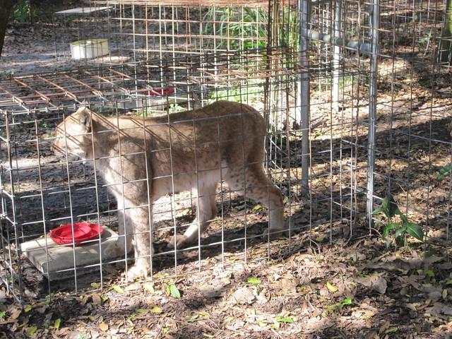 Cat Rescue Citrus County Florida